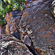 Climbing Rocks And Trees Art Print