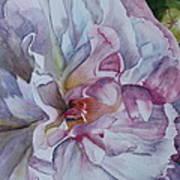 Close Focus Peony Art Print by Patsy Sharpe