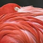 Close Up Of A Flamingo Resting Its Head Art Print
