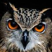 Close Up Of An African Eagle Owl Art Print