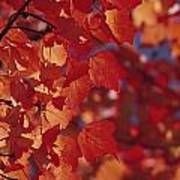 Close-up Of Autumn Leaves Art Print