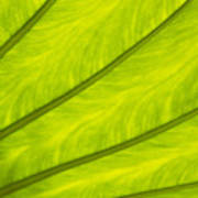 Close-up Of Surface Of A Green Leaf Art Print