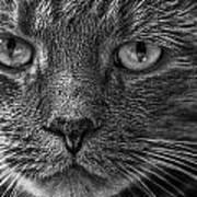 Close Up Portrait Of A Cat Art Print