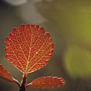 Close View Of A Leaf Art Print