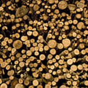 Close View Of Freshcut Wood Waiting Art Print