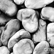 Closeup Of Fava Beans Art Print