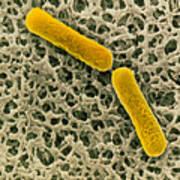 Clostridium Botulinum Bacteria Art Print