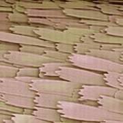 Clothes Moth Scales, Sem Art Print
