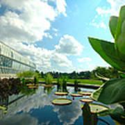 Cloudy Reflections And Lily Pad Companions  Art Print