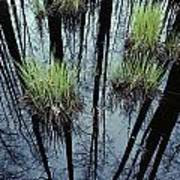 Clumps Of Grass In Water Reflecting Art Print
