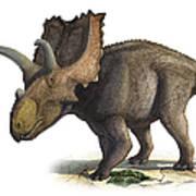 Coahuilaceratops Magnacuerna Art Print
