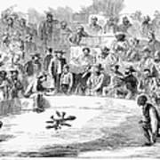 Cock Fighting, 1866 Art Print