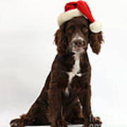 Cocker Spaniel With Santa Hat Art Print