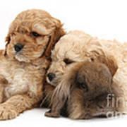 Cockerpoo Puppies And Rabbit Art Print