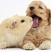 Cockerpoo Puppy And Guinea Pig Art Print