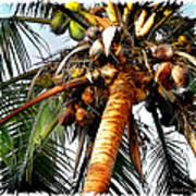 Cocoanuts Squared Art Print