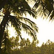Coconut Palm Trees On The Coast Art Print