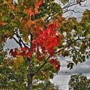 Cold Autumn Breeze  Art Print