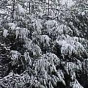 Cold Winter Snow Art Print