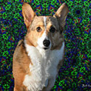Collie Art Print by Bill Cannon