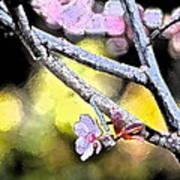 Color 62 Art Print