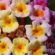 Color Explosion Flowers Art Print
