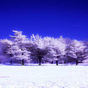 Color Infrared Winter Trees Art Print