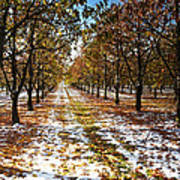 Color Play Art Print