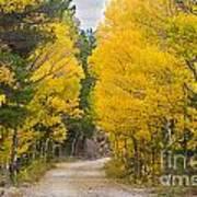 Colorado Autumn Aspen Road Boulder County Art Print