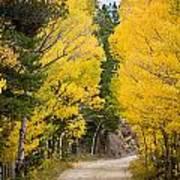 Colorado Rocky Mountain Aspen Road Portrait  Art Print