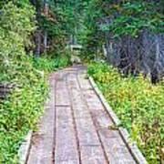 Colorado Rocky Mountain Forest Path Art Print