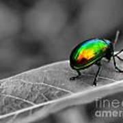 Colorful Bug Art Print