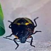 Colorful Hemiptera Nymph 1 Art Print