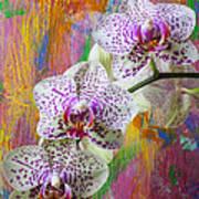 Colorful Orchids Art Print