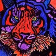 Colorfull Tiger Art Print