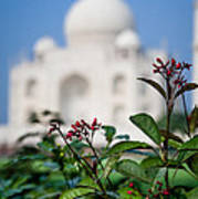 Colors Around The Taj Mahal Art Print