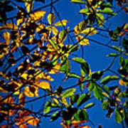 Colors Of The Autumn Elm Art Print