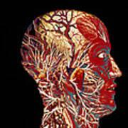 Colour Artwork Of Nerve & Blood Supply Of Head Art Print