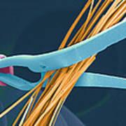 Coloured Sem Of Endoscopy Scissors Cutting Hair Art Print