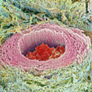 Coloured Sem Of Section Through A Human Arteriole Art Print by Steve Gschmeissner