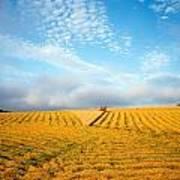 Combine Harvesting A Wheat Field Art Print