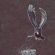 Common Raven Art Print