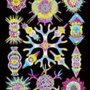 Computer Art Of Radiolarians (from Ernst Haeckel) Art Print