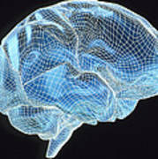 Computer Artwork Of A Wire-frame Model Of A Brain Art Print