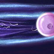 Computer Artwork Of Human Sperm Fertilising An Egg Art Print
