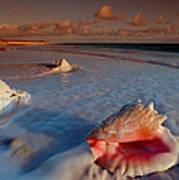 Conch Shell On Beach Art Print