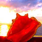 Conch Sunset Art Print