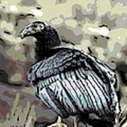 Condor Profile Art Print
