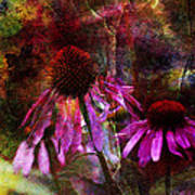 Cone Flower Beauties Art Print by J Larry Walker
