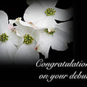 Congratulations On Your Debut - White Dogwood Blossoms Art Print